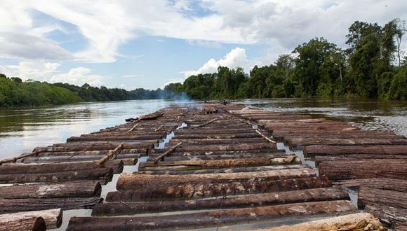 La tala ilegal, por Erik Fischer
