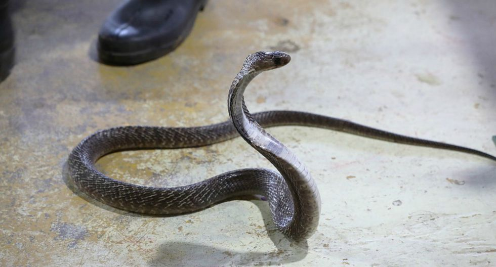 Se viralizó en Facebook el instante en que un soldado 'encara' a una peligrosa serpiente.  (Foto: Captura)