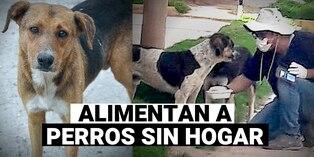 Voluntarios desafían a la pandemia para alimentar perros callejeros en Cusco