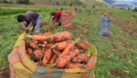 Hoy en día funcionan dos productos de seguros para el sector agrario: el Seguro Agrícola Catastrófico y el Seguro Agrícola Tradicional. (Foto: GEC)