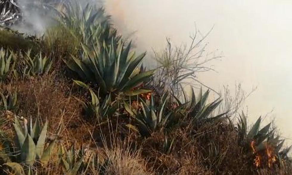 El incendio afectó más de 30 hectáreas de cultivos. (Foto: Captura video Municipalidad Chacayán)
