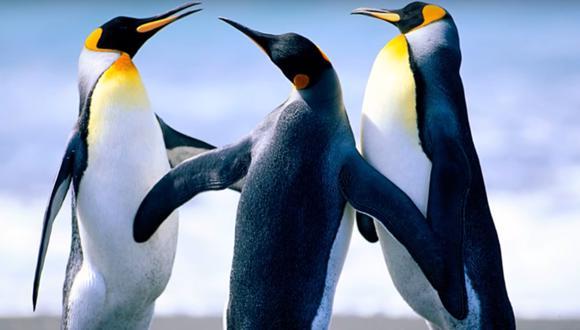 Estos pinguinos son parte del viral que te avisa que tienes internet de vuelta. (Captura de pantalla)