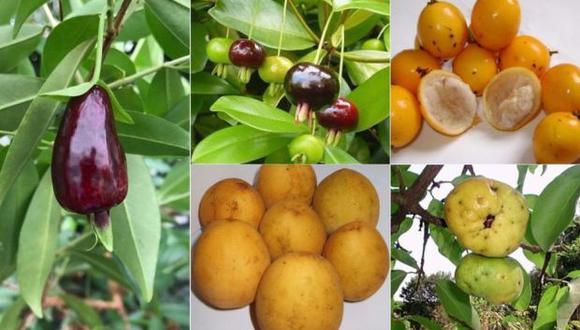 """En sentido de las agujas del reloj: grumixama, bacuparí, ubajay, araçá-piranga y cereza de Río Grande, candidatas a convertirse en las nuevas""""superfrutas"""", según científicos.  BBC"""