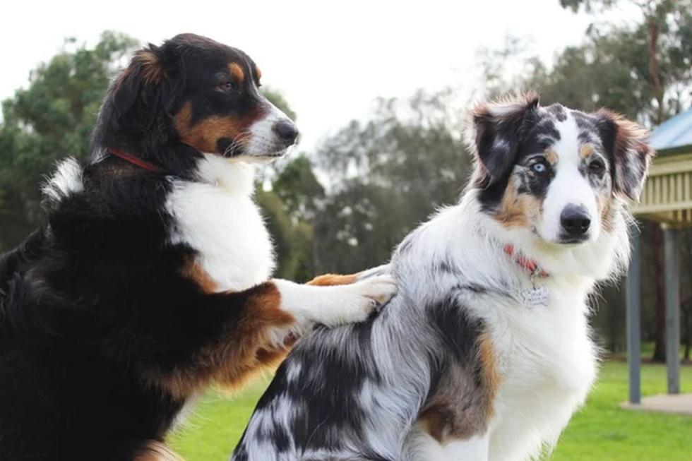 La escena protagonizada por dos perros ha causado sensación en redes sociales. (Pixabay)