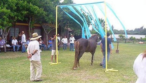 ¿Puede un caballo descubrir a un líder?
