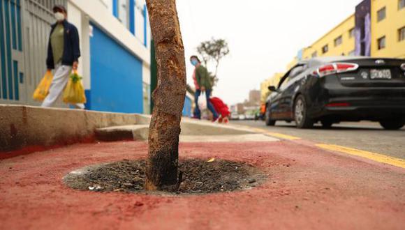 En la cuadra 6 del jirón Prolongación La Mar, la ciclovía queda interrumpida por arbustos y una rampa de cemento. (Foto: Alessandro Currarino/GEC)