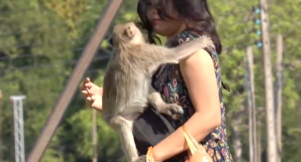 Mono travieso intenta robarle un beso a un turista en Tailandia. (Foto: Captura YouTube)