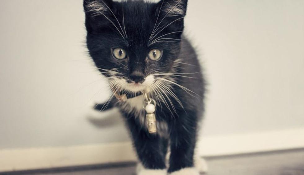 El accionar del gato generó carcajadas entre los usuarios de YouTube. (Pixabay / benscherjon)