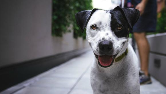 """Se viralizó en Facebook el hilarante momento en que un perro se """"apodera"""" de la dentadura de su dueño. (Foto: Referencial/Pixabay)"""