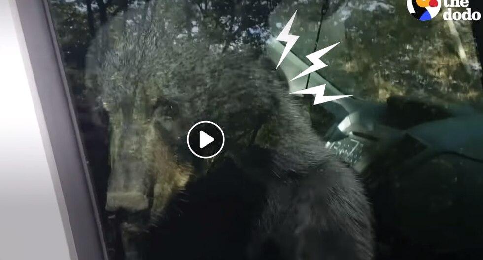 Dos crías de osos asustan a un hombre al ingresar y quedarse dentro de su camioneta. (Foto: Captura Facebook)