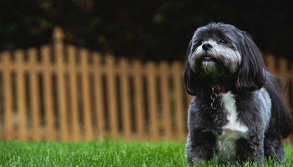 El can tiene un perfil en Instagram donde se dueña sube fotografías y videos junto a su mejor amigo 'Echo'. (Foto: Pixabay / referencial)