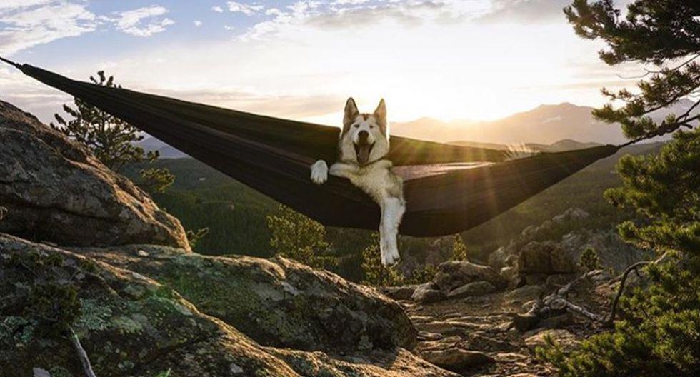 Loki. Aunque parezca más un animal salvaje, se trata de un perro siberiano. Esta mascota acompaña a su dueño, el aventurero Kelly Lund, por las montañas, lagos y paisajes nevados de Colorado, Estados Unidos. (Foto: Instagram/ @loki_the_wolfdog)