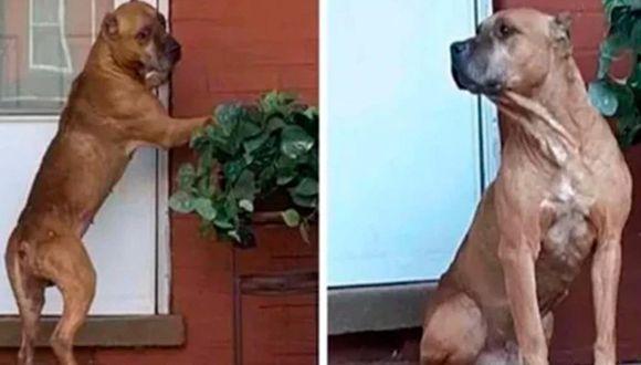 Facebook viral | Cupido esperó de esta manera durante 20 días a sus dueños, los mismo que lo habían abandonado a su suerte tras vender su propiedad. | Foto: Captura