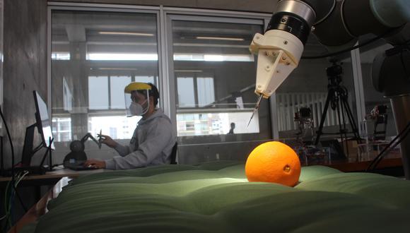 Los especialistas de la UTEC han probado la capacidad de corte del brazo robótico en naranjas. Utilizarán luego carne de cerdo. (Foto: UTEC)