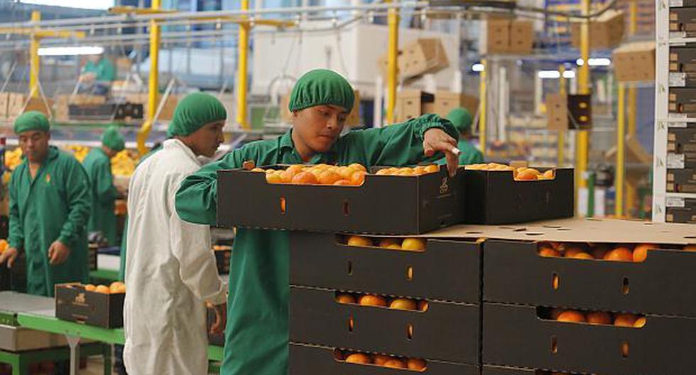 La ley de promoción agraria anterior fue promulgada en el 2000 y en el 2010 su vigencia fue extendida hasta 2021. (Foto: El Comercio)