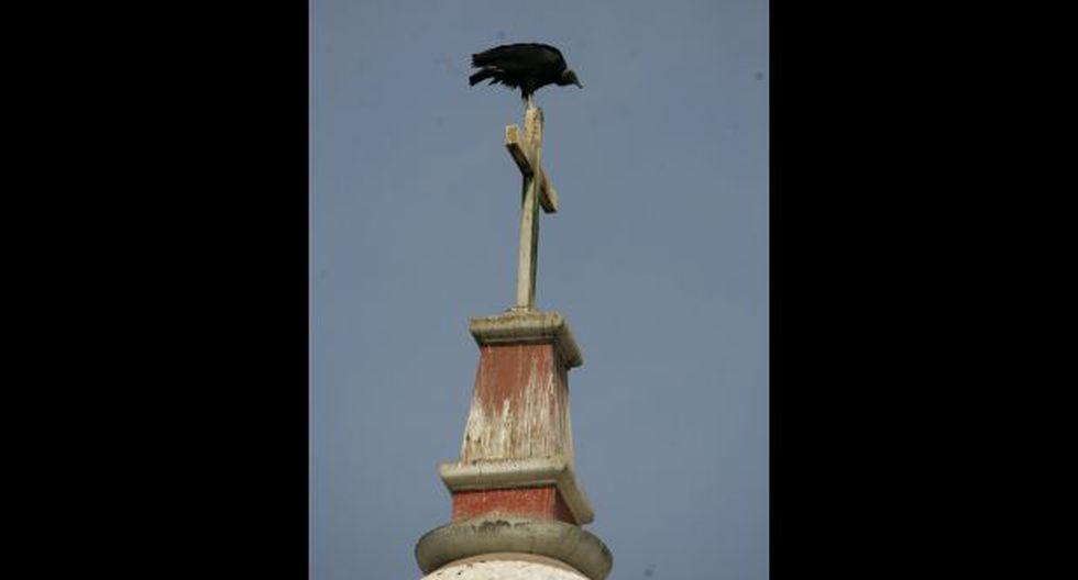 El gallinazo: el símbolo alado de Lima - 3