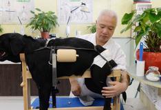 WUF: Conoce cómo puede sanar un animal en base a acupuntura