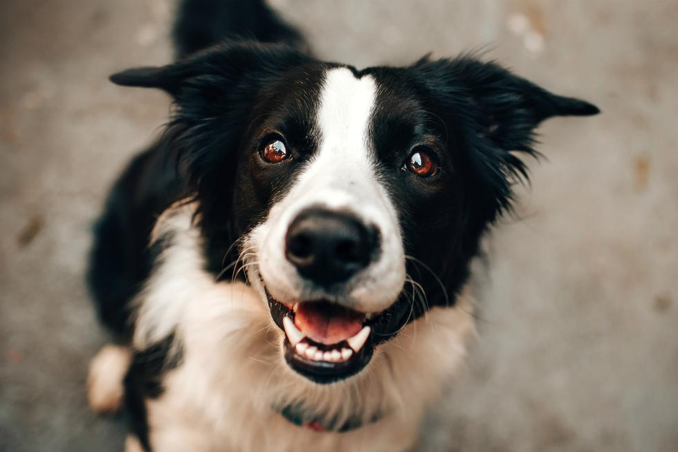 FOTO 1 DE 3 | La cuarentena puede generar en las mascotas problemas de comportamiento debido a que su rutina se ha visto modificada. | Foto: Pexels | (Desliza a la izquierda para ver más fotos)