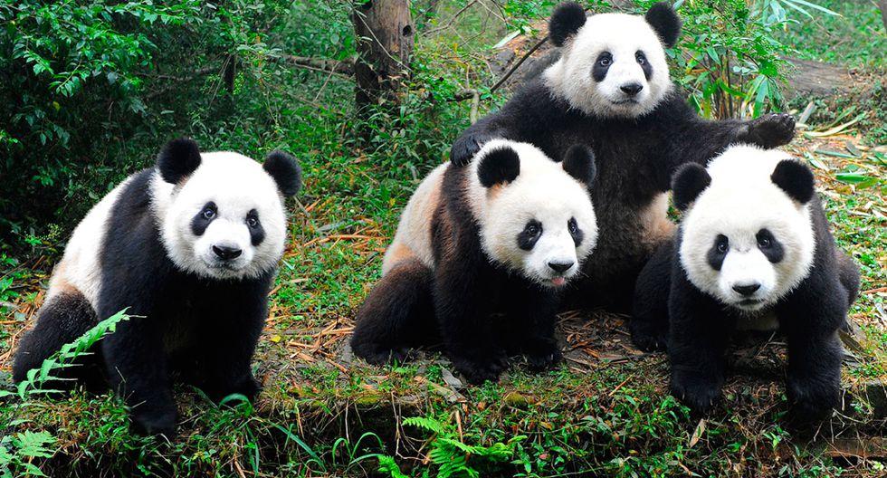 En la actualidad, China cuenta con cerca de 200 jardines botánicos (Foto: pixabay)