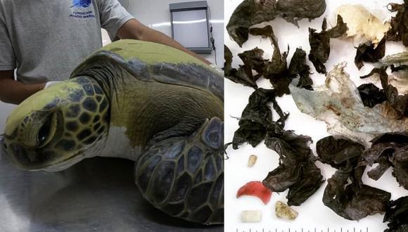 Desde su rescate, la tortuga ha defecado bolsas y pedazos de plástico duro (Foto: Facebook de Fundación Mundo Marino)
