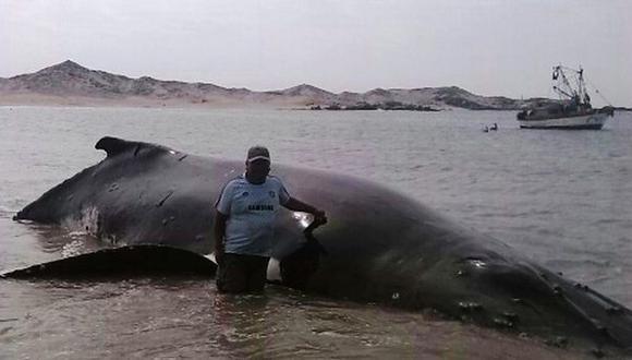 Ballena quedó atrapada en red pero fue rescatada por pescadores