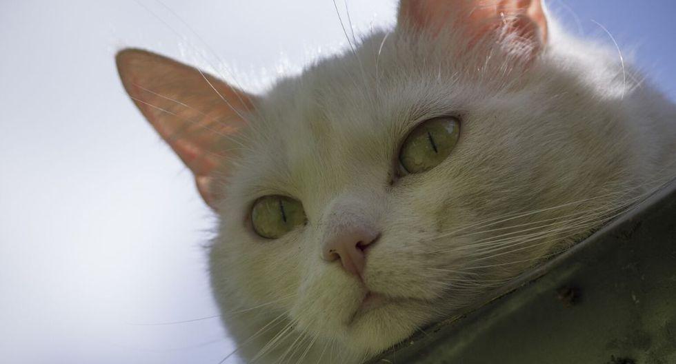 El gato tuvo mucha suerte de ser encontrado. (Foto: Referencial - Pixabay)