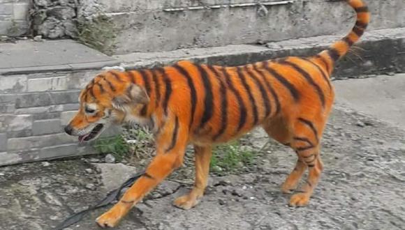Indignación por la foto de un perro pintado como un tigre. (Foto: Facebook Persatuan Haiwan Malaysia - Malaysia Animal Association)