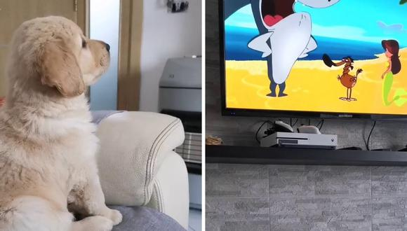 El video fue subido a Instagram en 2019. (Foto: @marley_goldenpuppy | Instagram)