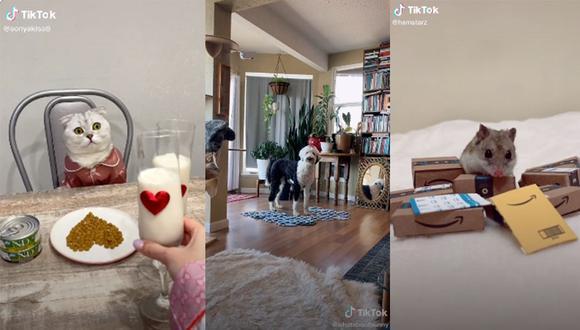 Mascotas de diferentes partes del mundo vienen causando furor en TikTok. Algunas, incluso, tienen millones de seguidores en esta red social.