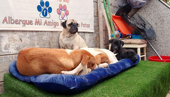 A estos perros del albergue Mi amigo de 4 patas no les importó compartir una misma cama con tal de estar cómodos. (Fotos: Cortesía Dentitoy)