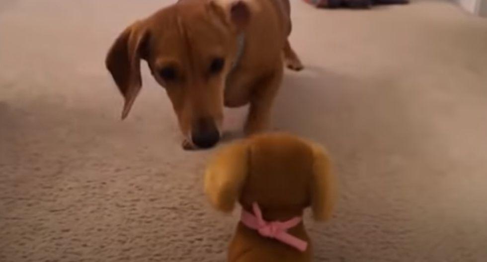 El perro tuvo una curiosa conducta al ver un can de juguete similar a él. (YouTube: Rumble Viral)