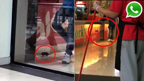 Vía WhatsApp: otra rata aparece en Centro Comercial Plaza Norte