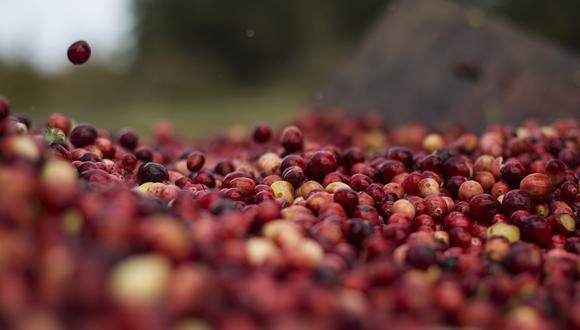 El Perú es uno de los principales agroexportadores del mundo. Por ejemplo, en lo que se refiere a los arándanos.