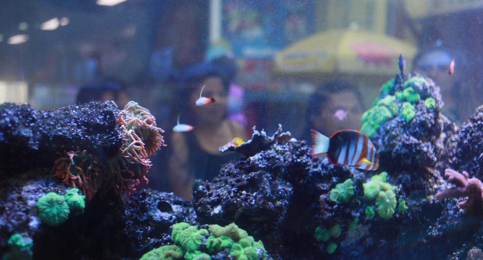Otra zona atractiva es el mundo de arrecifes de coral.(Foto: Juan Ponce / El Comercio)