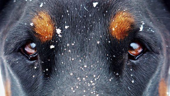 Se supo que el perro estuvo perdido por 48 horas, (Referencial - Pixabay)