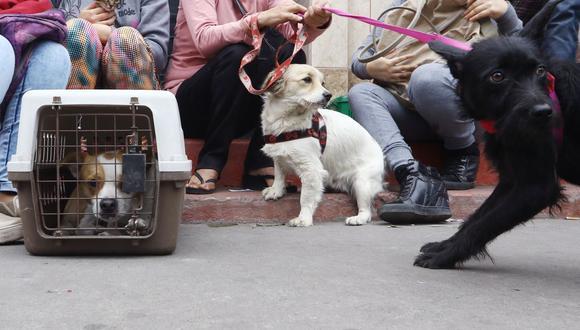 Establece un plan familiar de emergencia ante sismos que incluya a tus mascotas. (Foto de archivo: Alessandro Currarino /GEC)