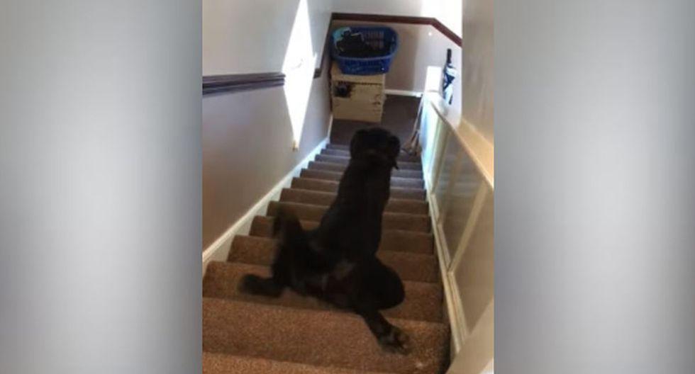 Inmediatamente se inclinó y comenzó a bajar las escaleras de una forma muy peculiar. (YouTube: ViralHog)