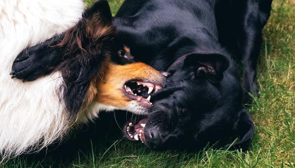 La agresividad se presenta en perros de temperamento dominante a los que no se les hace respetar límites.