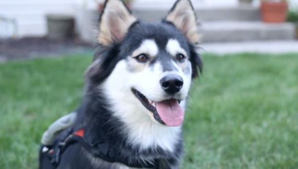 YouTube: Prótesis permiten que perro corra por primera vez