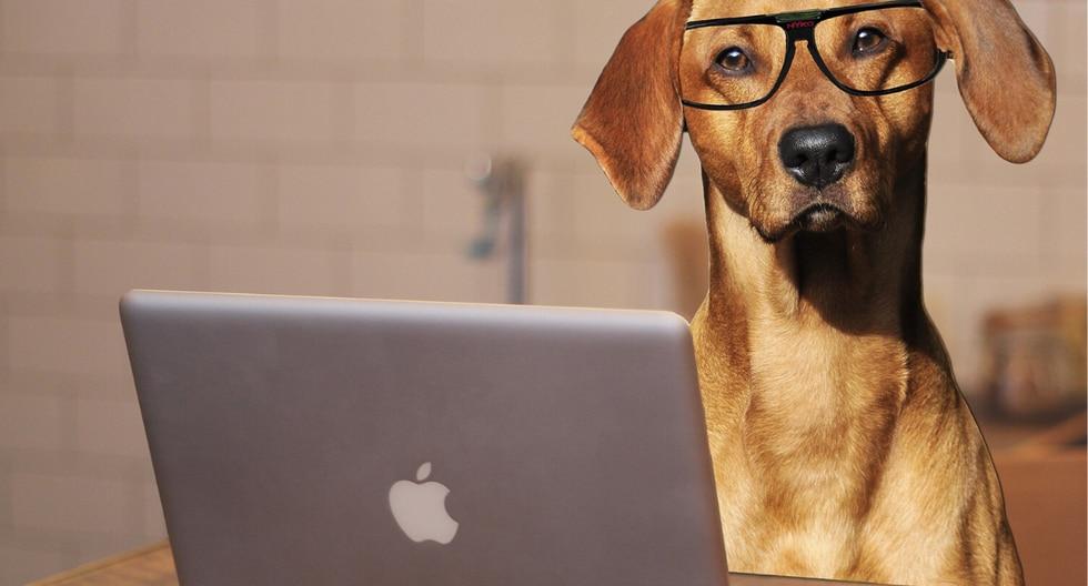 En la investigación se descubrió que los trabajadores que habían llevado a sus perros al trabajo tenían niveles más bajos de la hormona del estrés que aquellos que no. (Foto: Pixabay/Referencial)