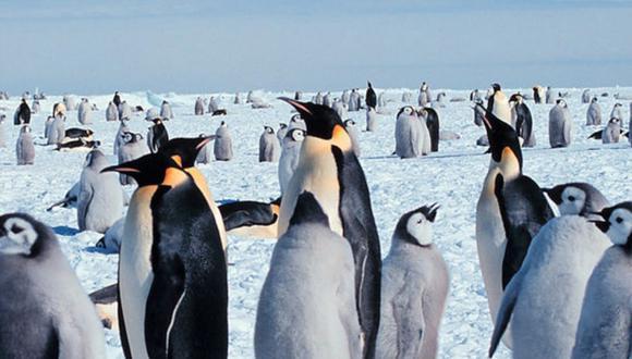 Los pingüinos emperador, los más grandes de todos los pingüinos vivos, necesitan hielo marino estable en la Antártida para prosperar.