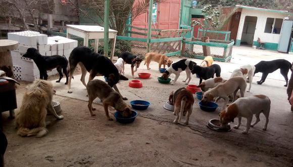 Durante los meses de agosto y septiembre, WUF logró llegar a más albergues de animales en la ciudad de Lima. (Foto: WUF)