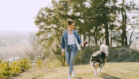 El uso de correa ayudará a que tu mascota aprenda a comportarse y luego se la podrás quitar para disfrutar el paseo. (Foto: Gustavo Fring / Pexels)
