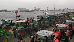 Agricultores de Dinamarca protestan contra el Gobierno por sacrificio de visones