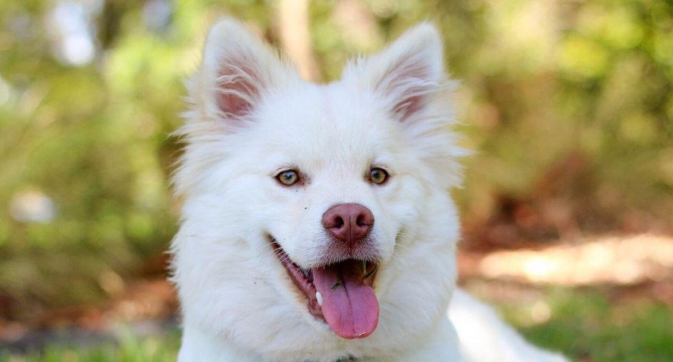 El gesto del can llamó la atención de los medios de comunicación de su localidad. (Foto: Referencial - Pixabay)