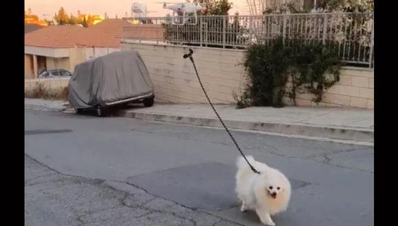 Un hombre en Chipre sacó a pasear a su perro utilizando un drone. (Foto: captura de video)
