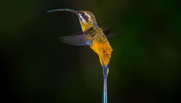 Con 1351 especies registradas y cientos de participantes, nuestro país logró una cifra récord de registro de aves.(Foto: Sernanp)