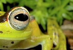 Más de 350 anfibios de Ecuador están en riesgo de extinción