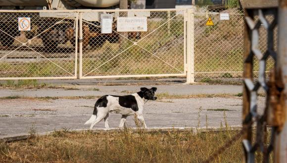 En abril de 1986 sucedió el accidente de Chernóbil. Más de 100.000 personas abandonaron sus viviendas y mascotas.  / Foto: Airbnb.