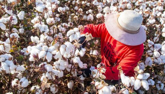 El algodón de Xinjian representa el 85% de la producción china y el 20% de la oferta mundial. GETTY IMAGES